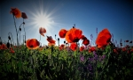 Thumbnail image for Remembrance Sunday at MBC, November 8. Still on but a change of plan