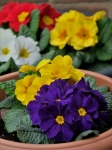 Thumbnail image for Plant Sale, Saturday 15th May – 2 til 4pm